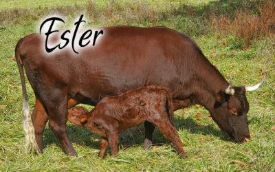 Ester #24