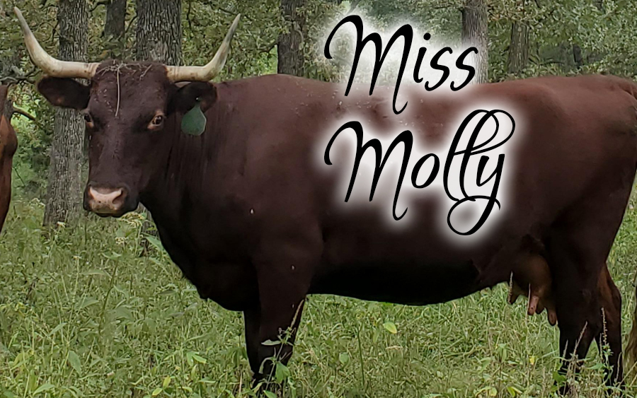 Miss Molly #45