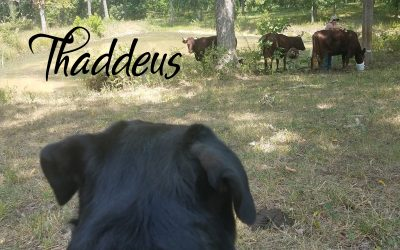 Ranch Supervisor – Thaddeus