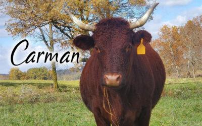 Carman #17