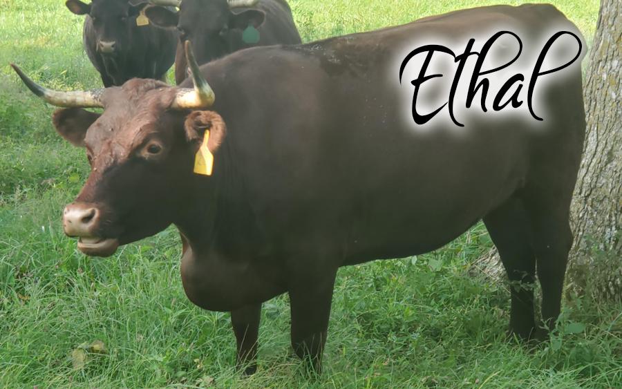 Ethal #28